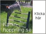 Kaninhoppning.se